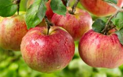 10 Benefits of Apple for health