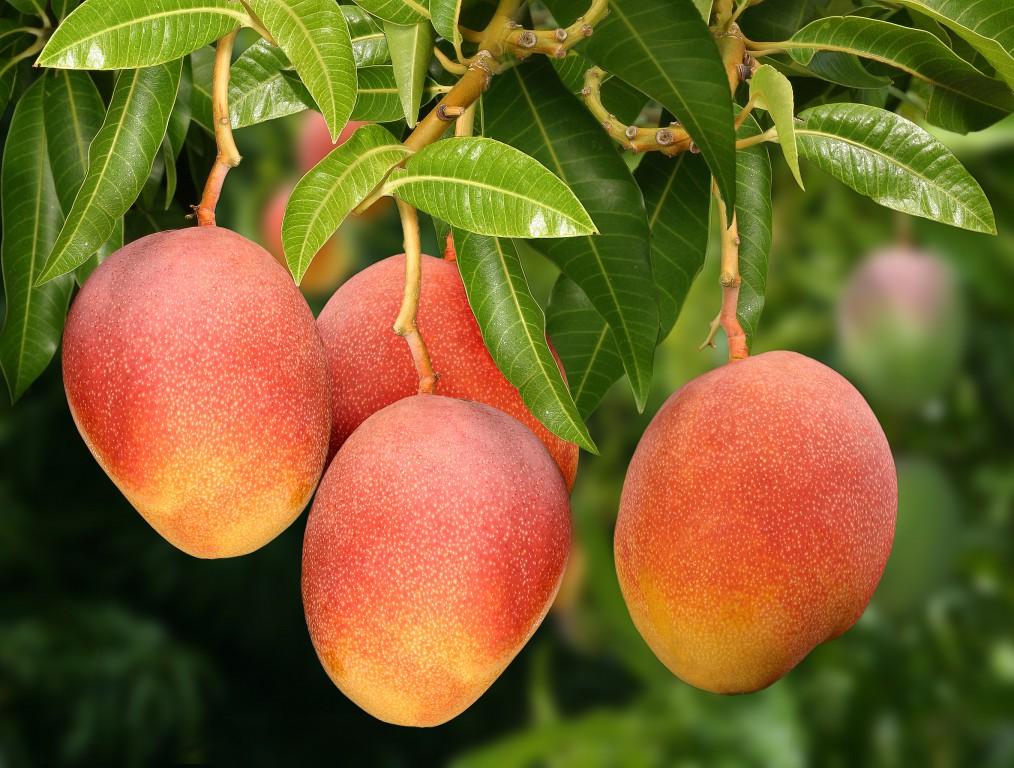 Proven Health Benefits of Mango
