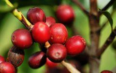 11 Proven Health Benefits of Coffee