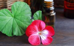 10 Proven Health Benefits of Geranium Oil