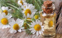 10 Proven Health Benefits of Chamomile