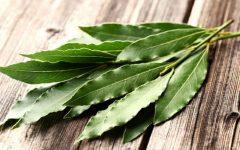 20 Proven Health Benefits of Eucalyptus