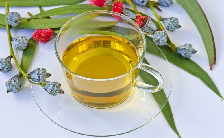 Eucalyptus Tea Benefit
