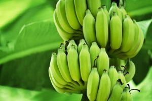 Green Banana Benefit