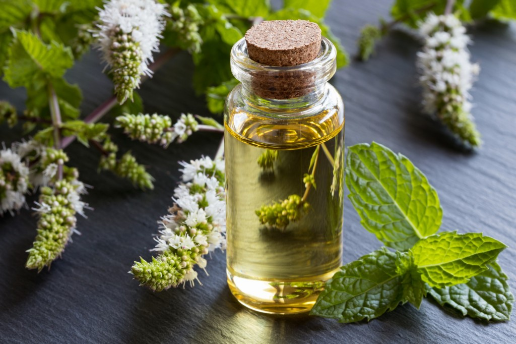 Benefit of Mint Oil
