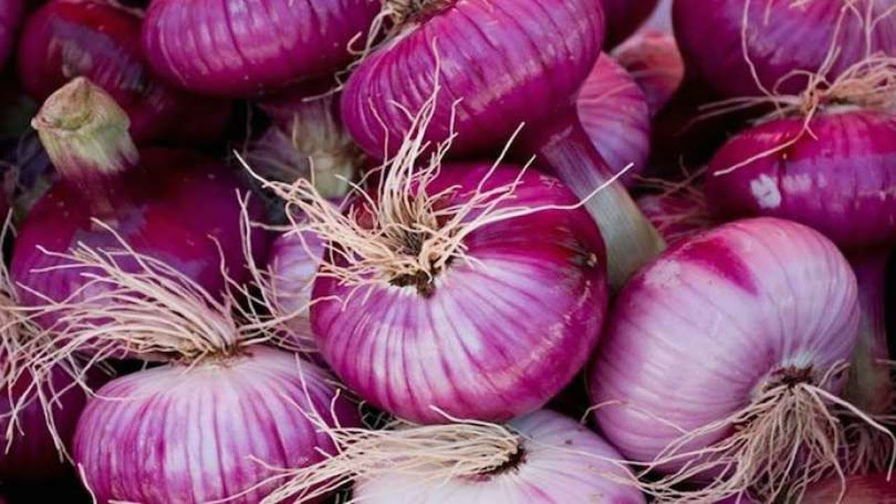 Benefits of Purple Onion
