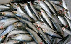 15 Proven Health Benefits of Sardines