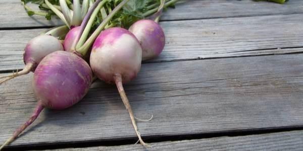 Turnip Benefit