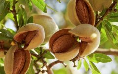 15 Proven Health Benefits of Almond