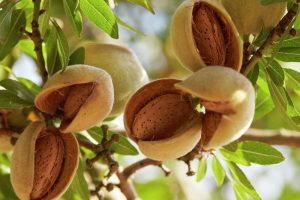 almond Benefit