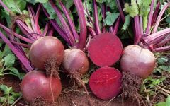 22 Proven Health Benefits of Beet
