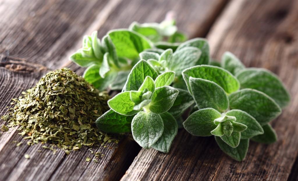benefits of oregano