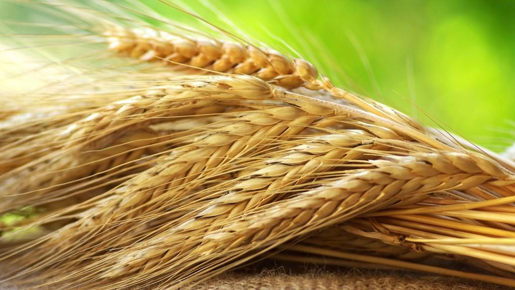 benefit of rye