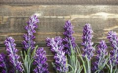 16 Proven Health Benefits of Lavender