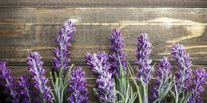 benefits lavender