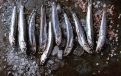 18 Proven Health Benefits of Anchovy