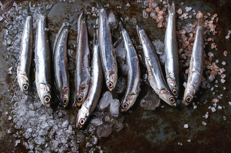 benefits of anchovy