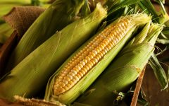10 Proven Health Benefits of Green Corn