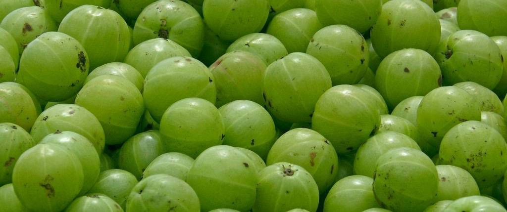 benefit of amla