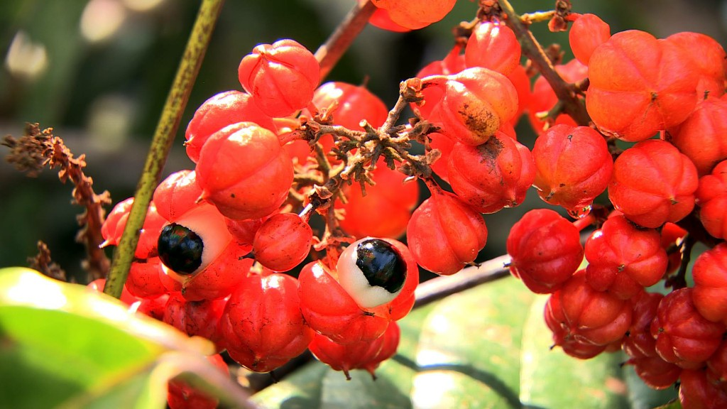 guarana benefits