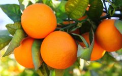10 Benefits of Orange For Health