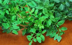 18 Proven Health Benefits of Rue