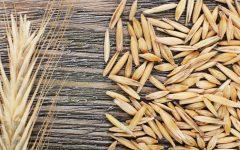 15 Proven Health Benefits of Rye
