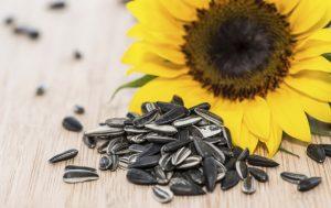 sunflower seed Benefit