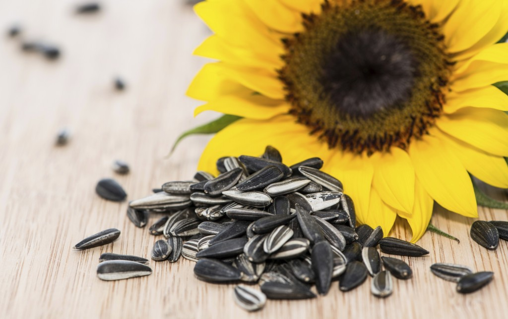 sunflower seed Benefit