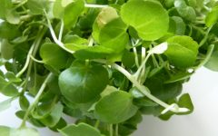 17 Proven Health Benefits of Watercress